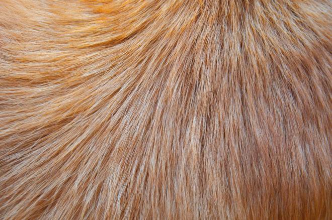 Allergie aux poils de chien